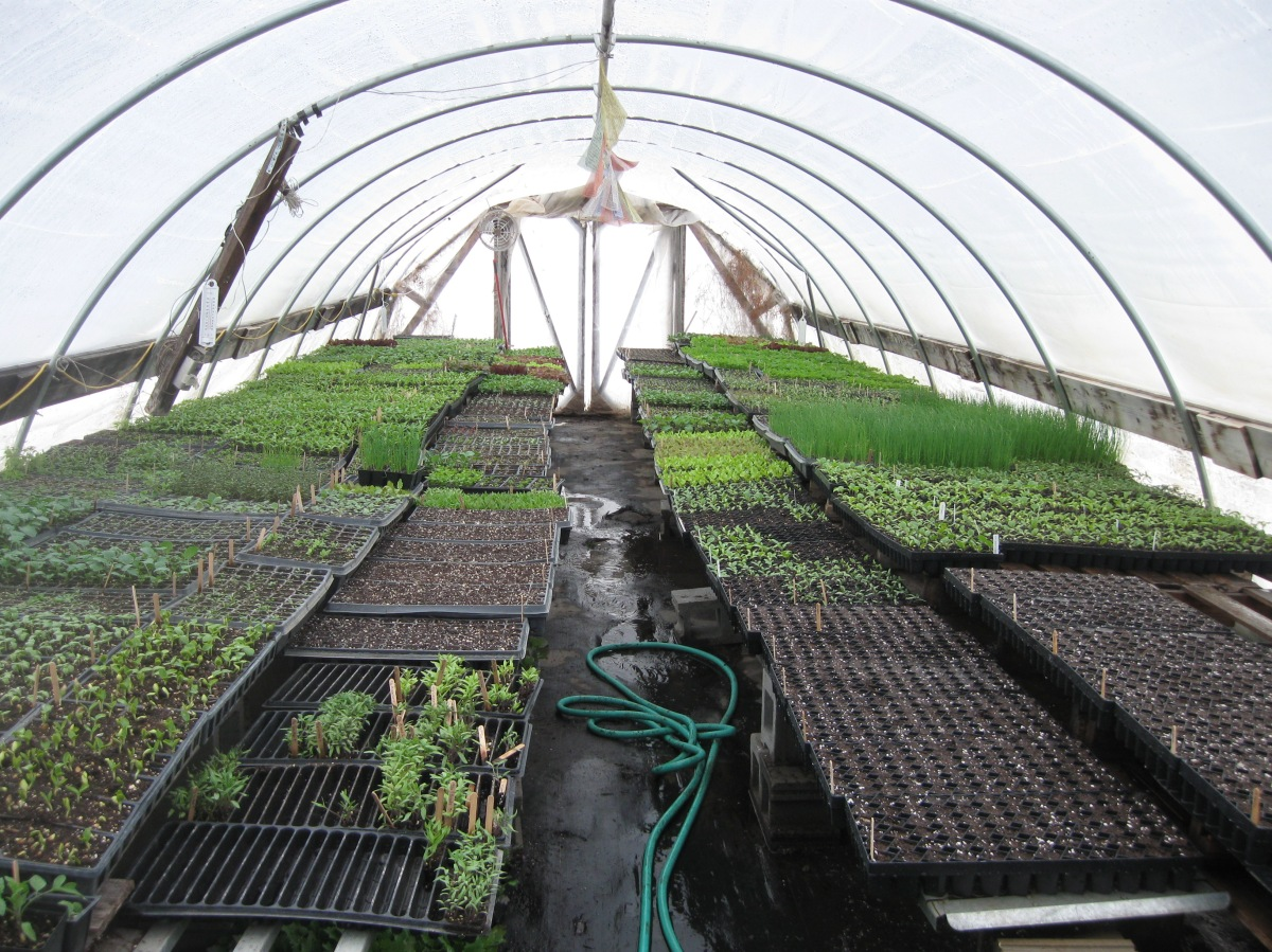 50 flats in greenhouse