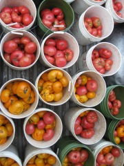 Tomatoes and Tomatillos